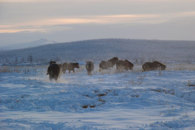 Yakutia -50°C, extrem cold, Bernard Grua