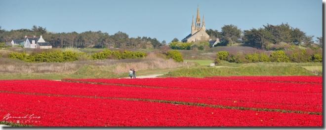 Chapelle Notre dame de Tronoën avec tulipes rouges. Pays Bigouden; Photo B. Grua