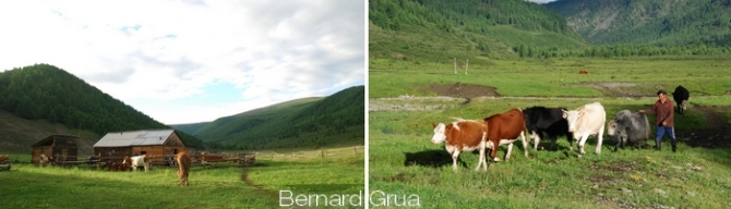 Boldokte, cheval, yaks et vaches Montbéliardes - Photo Bernard Grua