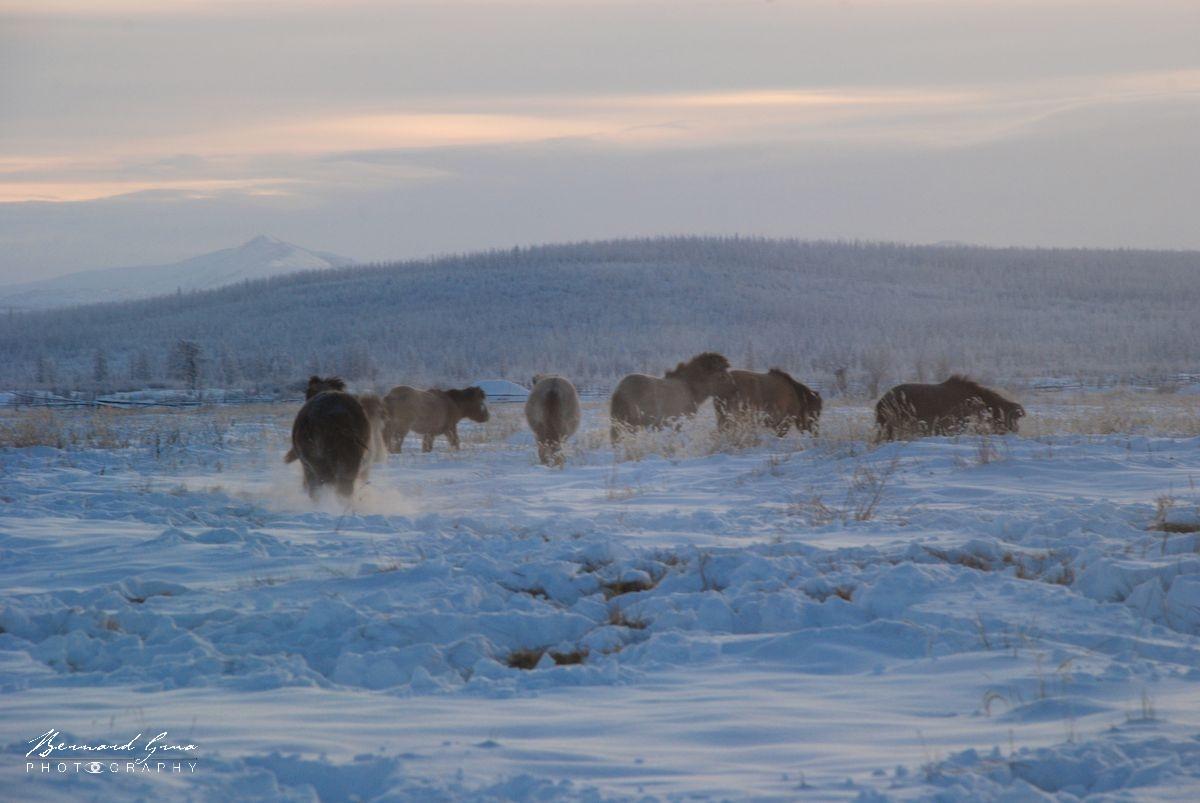 Photographie Bernard Grua Iakoutie Sibérie Russie