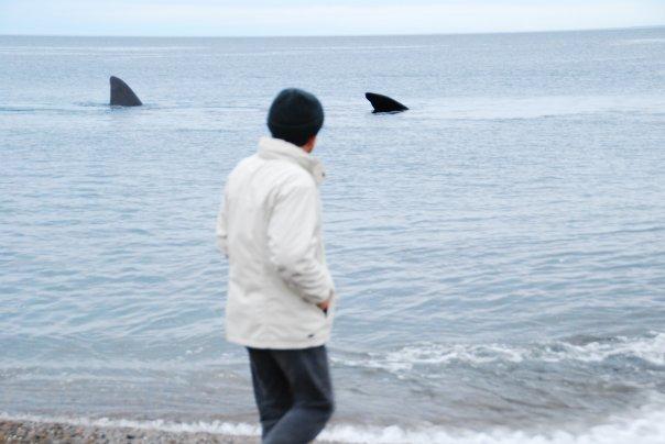 Bernard Grua devant une baleine, Bahia de la Peninsulda Valdès, Patagonie, Argentine