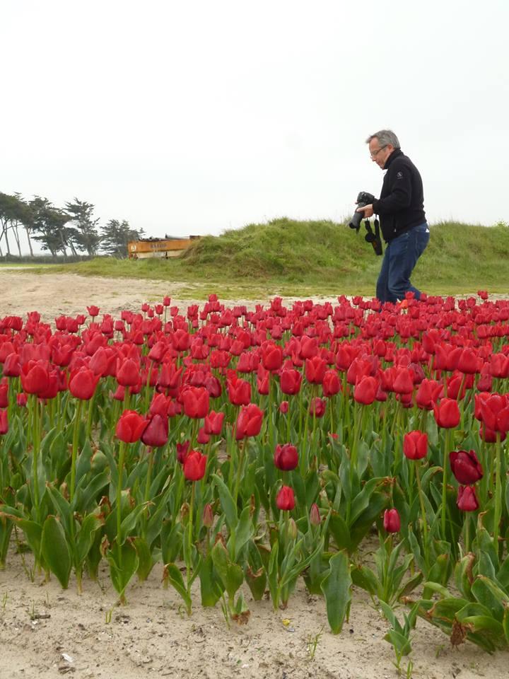 Bernard Grua photographie les champs de tulipe à La torche, Baie d'Audierne, Pays Bigouden, Bretagne